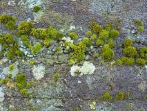 Fondo, hormigón, verde, musgo Imagen de archivo