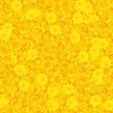 Fondo inconsútil con el pétalo multicolor de la flor Imagen de archivo libre de regalías
