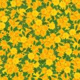 Fondo inconsútil con el pétalo multicolor de la flor Fotografía de archivo libre de regalías