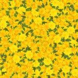 Fondo inconsútil con el pétalo multicolor de la flor Imagen de archivo