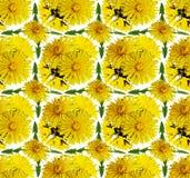 Fondo inconsútil con las flores del diente de león Imagen de archivo libre de regalías