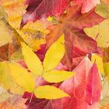 Fondo inconsútil con las hojas de otoño Fotografía de archivo libre de regalías