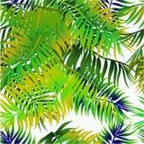 Fondo inconsútil con las hojas de palma Fotos de archivo