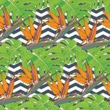 Fondo inconsútil con las hojas de palma y las flores tropicales Imagen de archivo libre de regalías