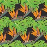 Fondo inconsútil con las hojas de palma y las flores tropicales Foto de archivo libre de regalías