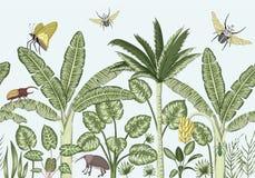 Fondo inconsútil de la frontera del vector con las plantas tropicales y los insectos stock de ilustración