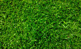 Fondo inconsútil de la hierba verde Fotos de archivo