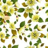 Fondo inconsútil de la primavera con las flores blancas con las hojas del verde y del amarillo Imágenes de archivo libres de regalías