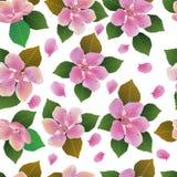 Fondo inconsútil de la primavera con las flores blancas con las hojas del verde y del amarillo Fotos de archivo libres de regalías