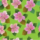 Fondo inconsútil de la primavera con las flores blancas con las hojas del verde y del amarillo Foto de archivo