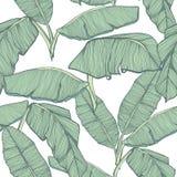 Fondo inconsútil de las hojas de palma tropicales Imagen de archivo
