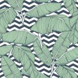 Fondo inconsútil de las hojas de palma tropicales Imagen de archivo libre de regalías