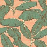 Fondo inconsútil de las hojas de palma tropicales Imágenes de archivo libres de regalías