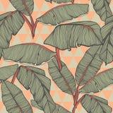 Fondo inconsútil de las hojas de palma tropicales Fotografía de archivo