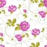 Fondo inconsútil de las rosas Foto de archivo libre de regalías