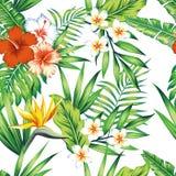 Fondo inconsútil del blanco del modelo de las plantas tropicales Fotografía de archivo