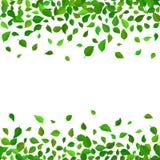 Fondo inconsútil del estampado de flores del vector El verde deja el contexto El hibisco sale vector realista de la frontera repe ilustración del vector