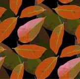 Fondo inconsútil del modelo de las hojas de otoño foto de archivo
