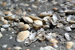 Fondo inconsútil del shell Imagen de archivo
