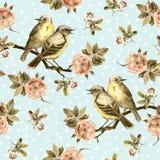 Fondo inconsútil del vintage con los pájaros retros en el jardín Foto de archivo libre de regalías