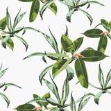 Fondo inconsútil floral del modelo del vector hermoso con agavo y ficus libre illustration