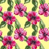 Fondo inconsútil hermoso del estampado de flores con Fotos de archivo libres de regalías