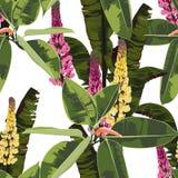 Fondo inconsútil hermoso del estampado de flores con el elástico de los ficus y las flores brillantes tropicales de los lupines stock de ilustración