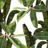 Fondo inconsútil hermoso del estampado de flores con el elástico de los ficus y las hojas brillantes tropicales de los plátanos libre illustration