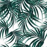 Fondo inconsútil hermoso del estampado de flores con las hojas de palma tropicales Perfeccione para los papeles pintados ilustración del vector