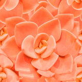Fondo inconsútil monocromático anaranjado del succulent Imagen de archivo