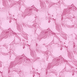 Fondo inconsútil monocromático rosado con las flores de la manzana Fotografía de archivo libre de regalías