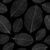 Fondo inconsútil secado de las hojas. Foto de archivo