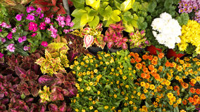 Fondo insignificante dei fiori Immagine Stock Libera da Diritti