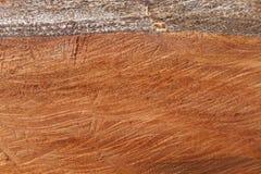 Fondo interno di legni Fotografia Stock