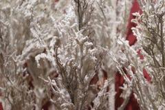 Fondo inusual de las ramas de árbol Año Nuevo del concepto Imagenes de archivo