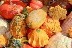 Fondo irregolare arancio e verde di macro di caduta della zucca della zucca Fotografia Stock Libera da Diritti