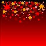 Fondo japonés del otoño de las hojas de arce Foto de archivo libre de regalías