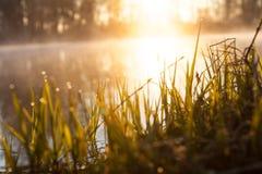 Fondo, l'erba da un fiume in Sun Fotografia Stock