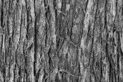 Fondo la corteza de un árbol viejo Imagen de archivo libre de regalías