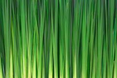 Fondo largo de la hierba Imagenes de archivo