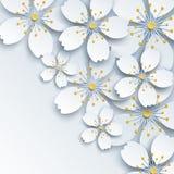 Fondo leggero con i fiori bianchi di sakura Fotografia Stock