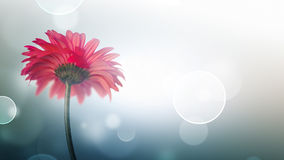 Fondo leggero del bokeh con il fiore rosso Fotografia Stock Libera da Diritti