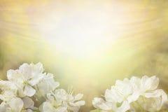 Fondo leggero dorato del confine di Bokeh del fiore di Pasqua fotografia stock