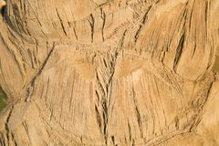 Fondo leggero naturale - fine della palma su fotografia stock