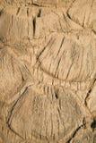 Fondo leggero naturale - fine della palma su immagine stock