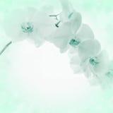Fondo ligero con las flores de la orquídea imágenes de archivo libres de regalías