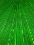 Fondo linear orgánico abstracto, textura de una hoja de palma Foto de archivo