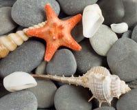 Fondo a los moluscos marinas y a la estrella Foto de archivo libre de regalías