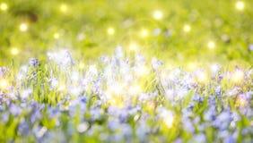 Fondo luminoso con i piccoli fiori blu in erba immagine stock