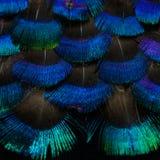 Fondo luminoso delle piume Fotografia Stock